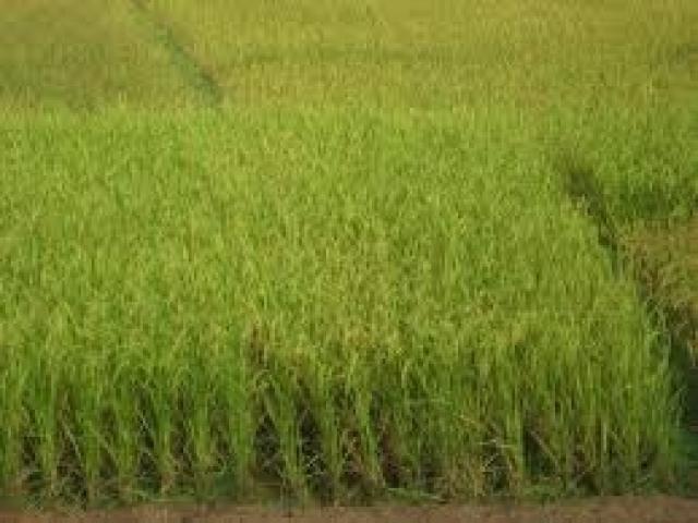 Land in Habarana Polonnaruwa main road